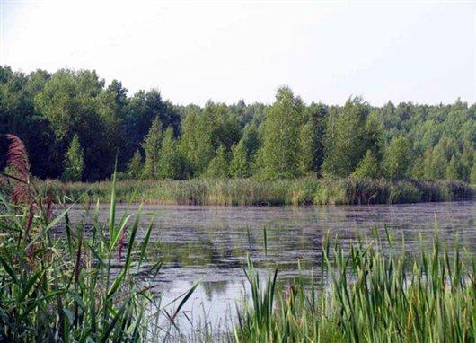 рыбалка в районе сосновый бор
